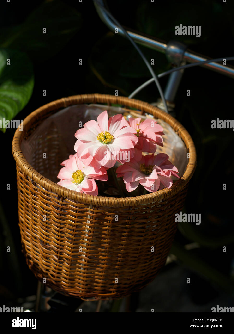 Wicker Bicycle Basket With Fake Pink Flowers Inside Stock Photo