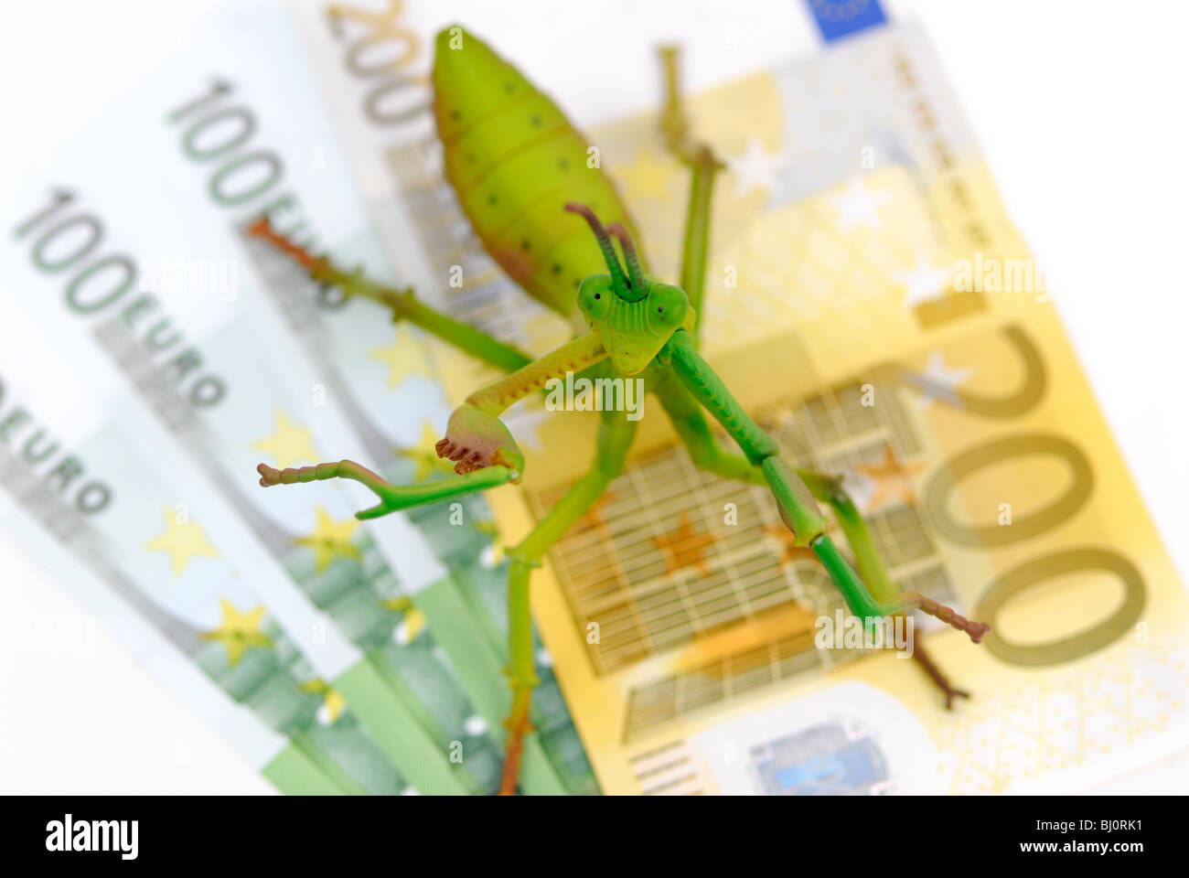 Grasshopper on money, hedge funds - Stock Image