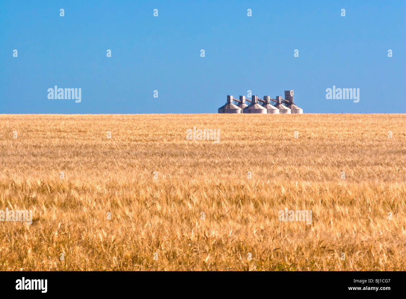 Wheat Field and Silos - Stock Image