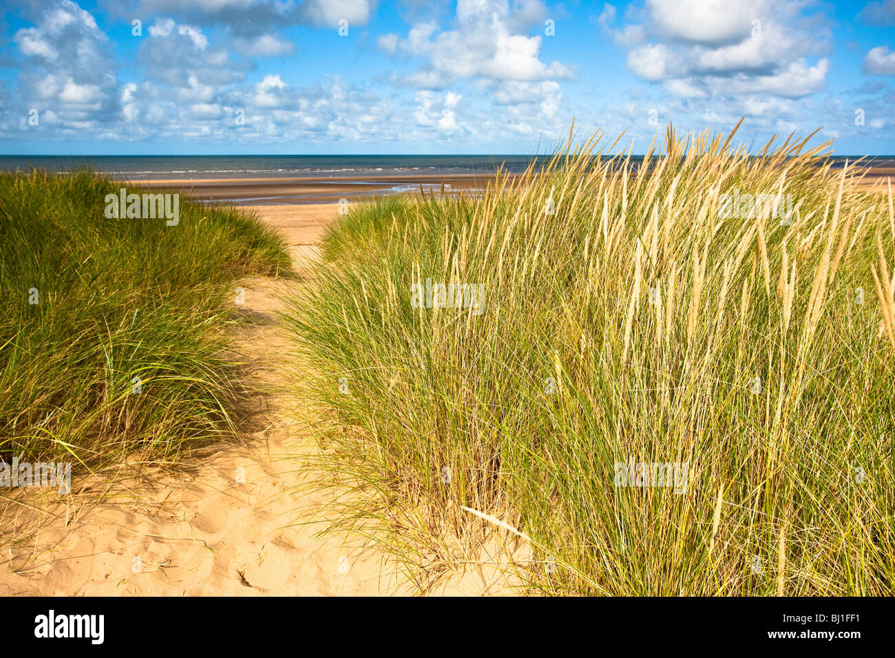 Marram grass on the sand dunes at Thornham, Norfolk - Stock Image