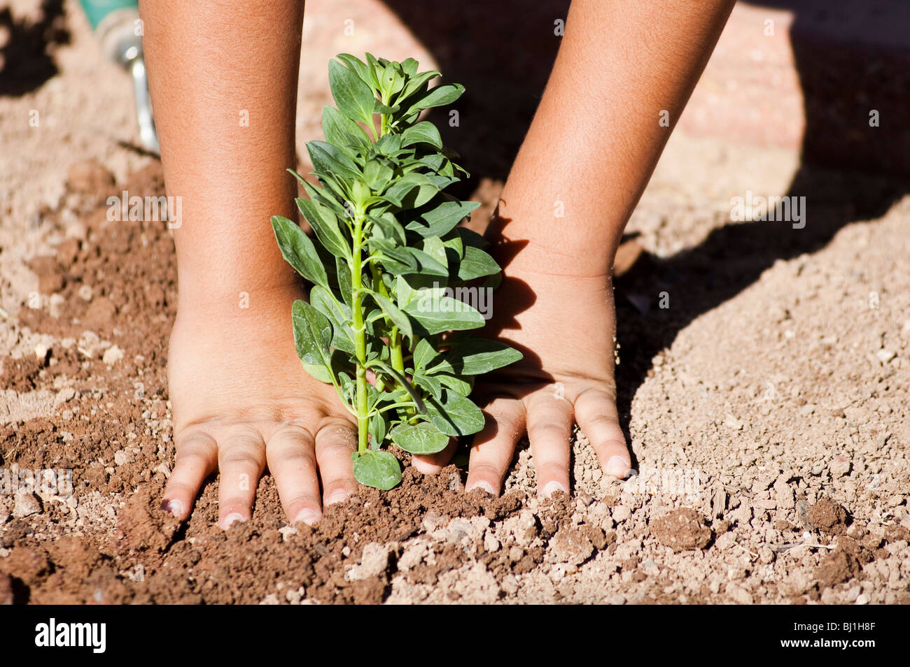 a child plants a flower garden as a community activity. - Stock Image