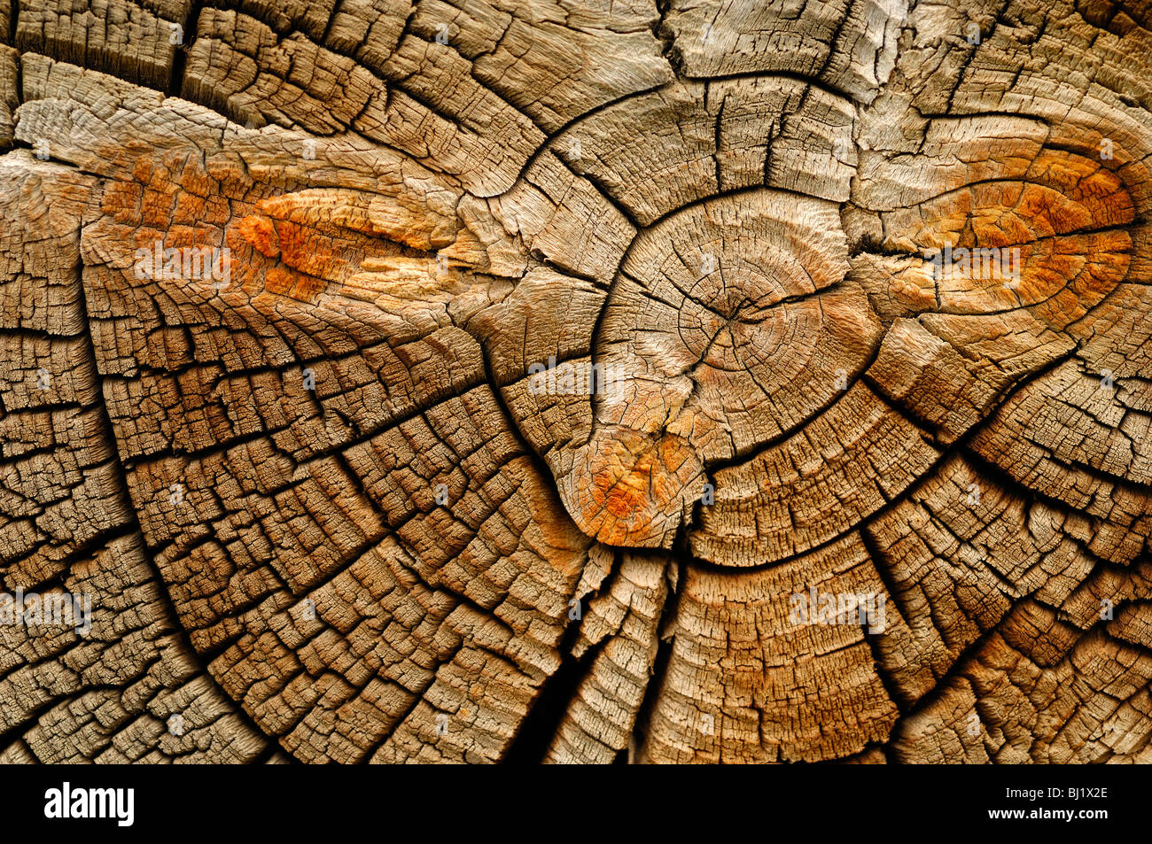 Close up of a log, part of the exterior of a log cabin at South Pass City, Wyoming, United States of America - Stock Image