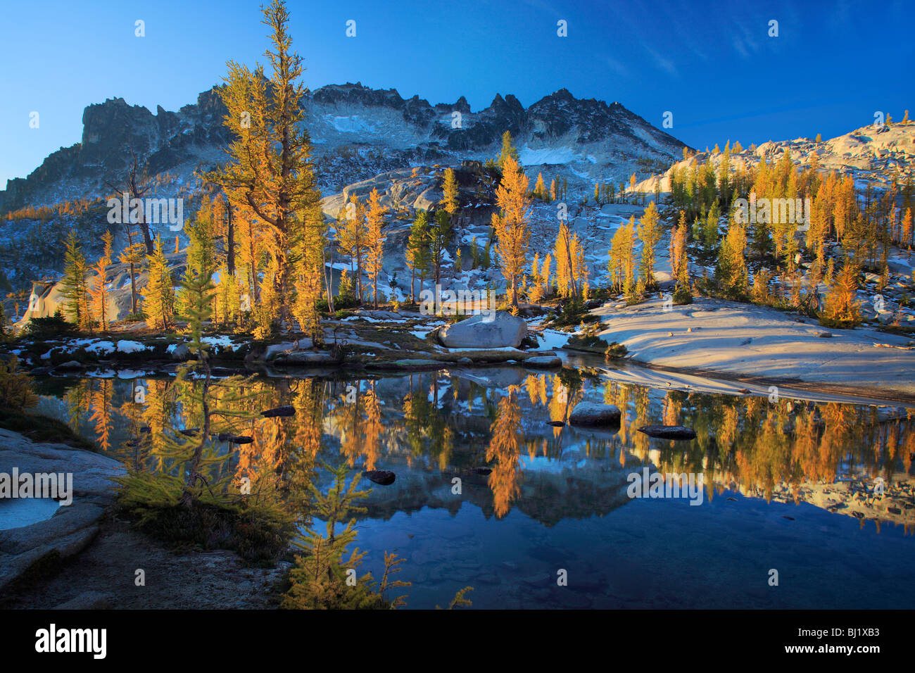 Larch trees in the Enchantment Lakes wilderness in Washington state, USA - Stock Image