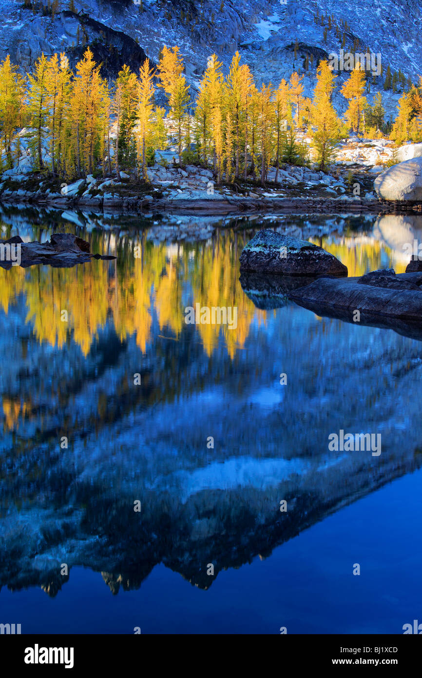 Larch trees at Leprechaun Lake in the Enchantment Lakes wilderness in Washington state, USA - Stock Image