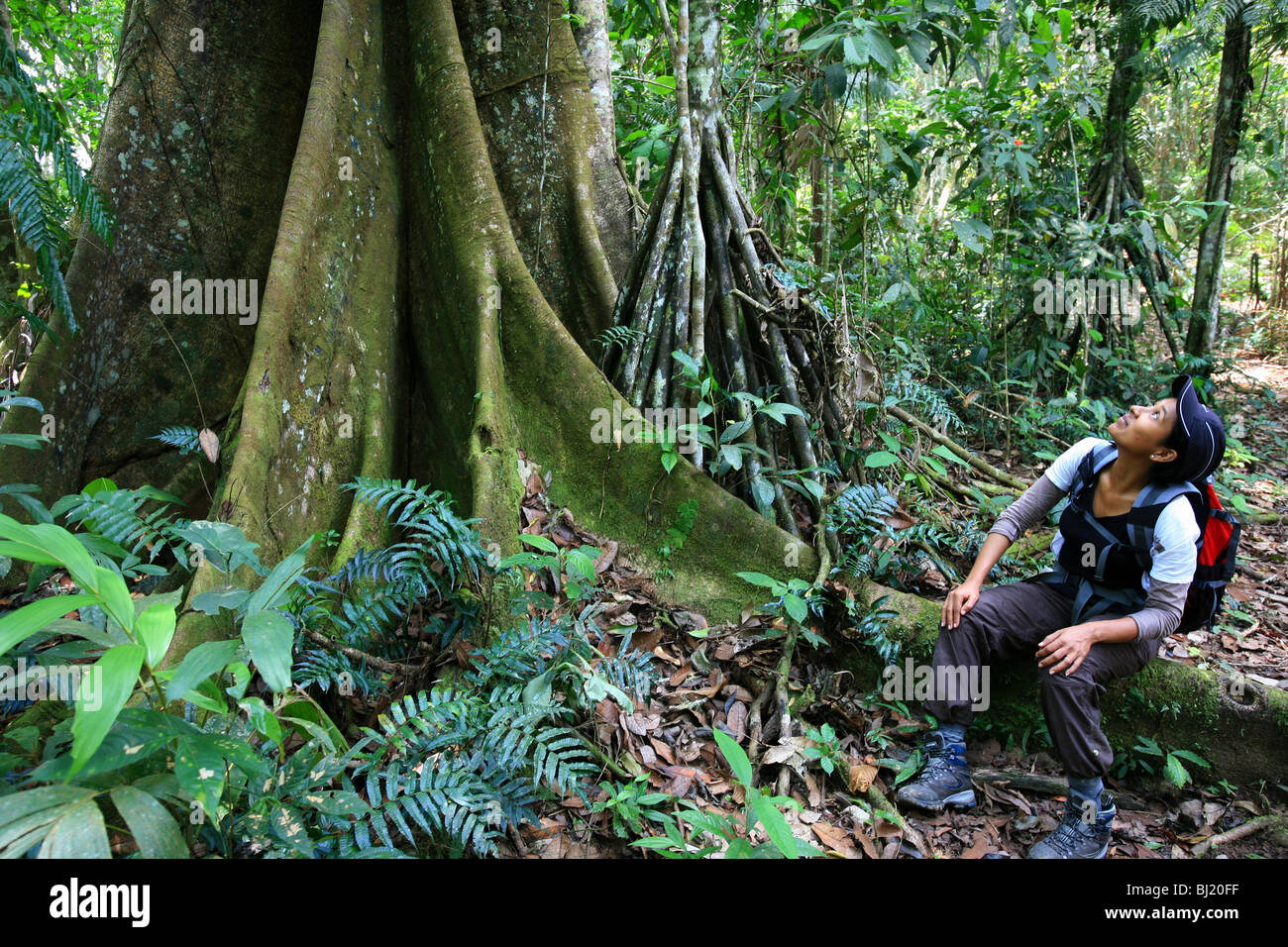 Girl and big ceiba tree at Cerro Pirre in the Darien national park, Darien province, Republic of Panama. Stock Photo