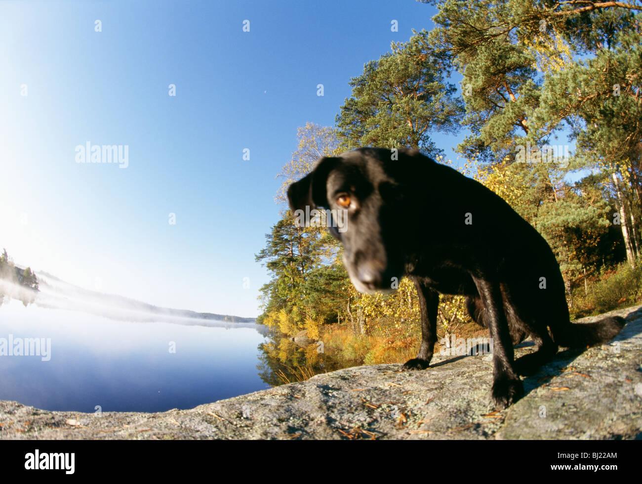 A dog by a lake - Stock Image
