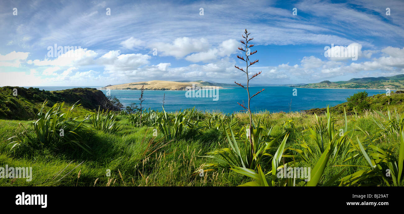 Hokianga Harbour, North Island New Zealand Panorama - Stock Image