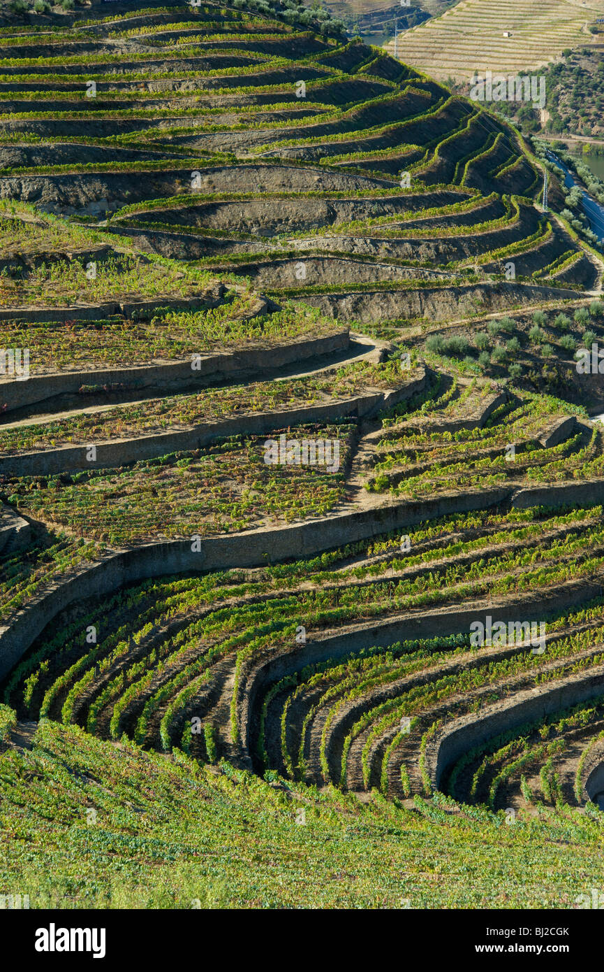 Portugal, The Alto Douro Port Wine Growing District, the Douro Valley Near Pinhao - Stock Image