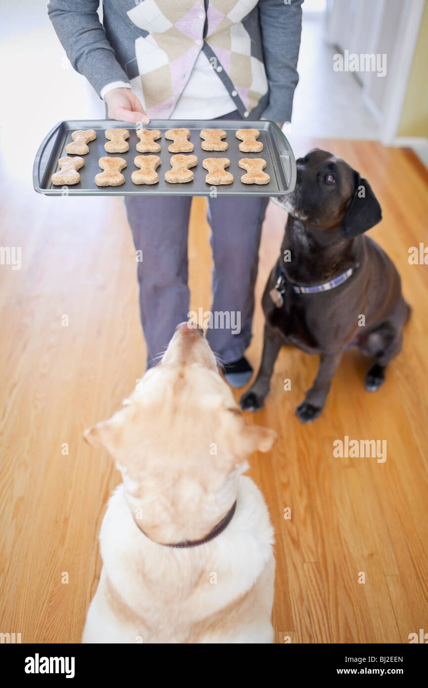 Obedience Training Stock Photos & Obedience Training Stock