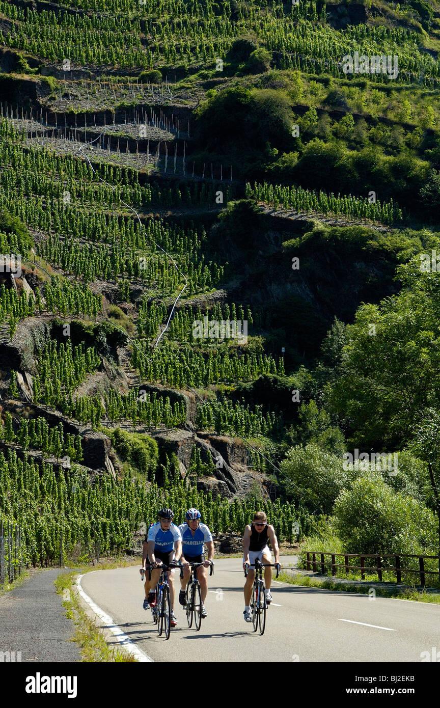 Eifel, Ahrtal bei Bonn Altenahr, Straße durch das Ahrtal, steile Weinberge, Stock Photo