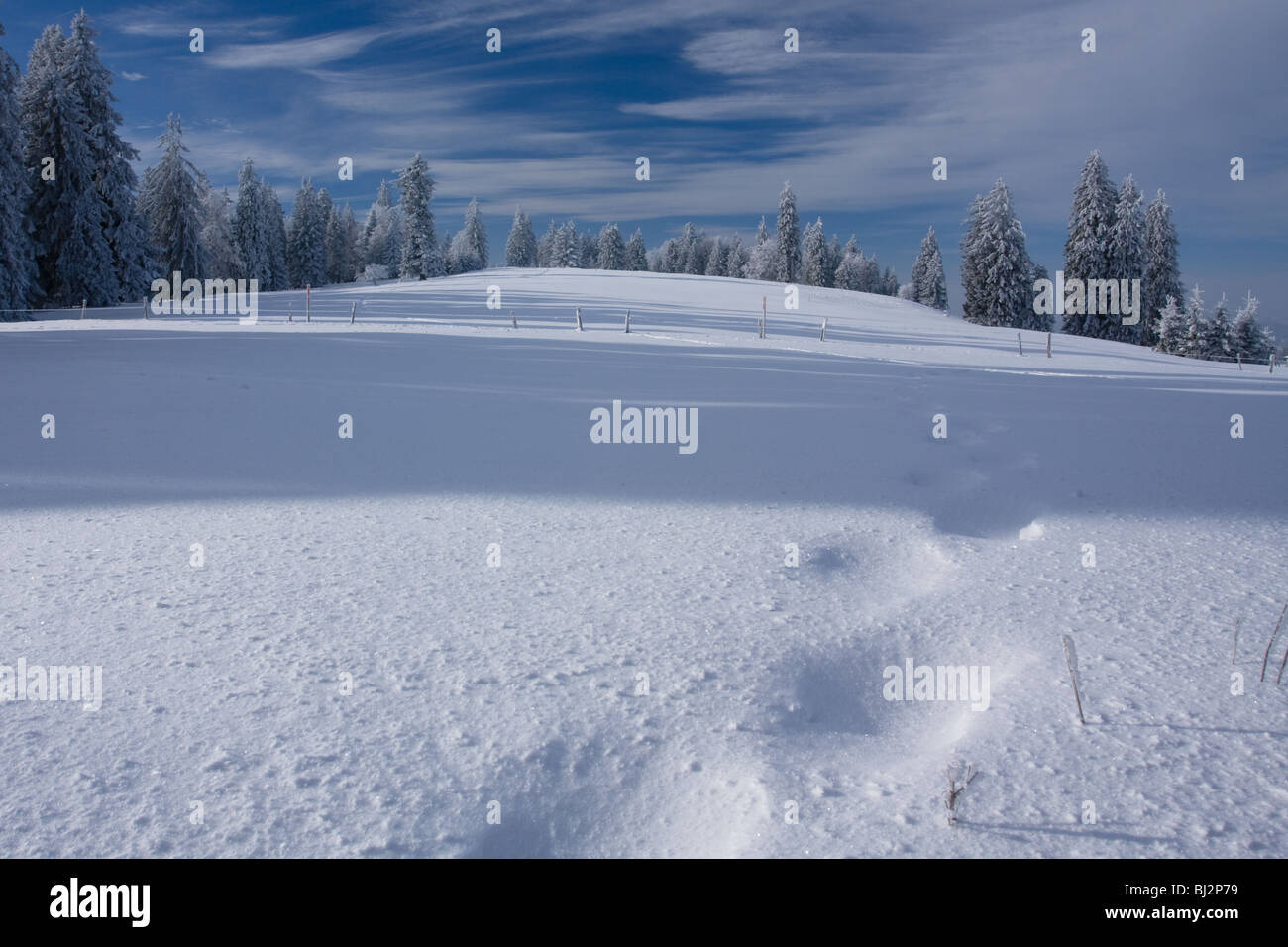 Snow and winter landscape scene with a beautiful sky and some pins trees in La Chaux-de-Fonds in Switzerland. - Stock Image