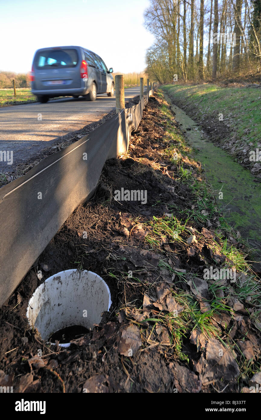 Barrier with buckets for migrating amphibians / toads crossing the road during annual migration in the spring - Stock Image