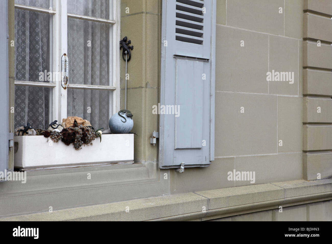 Lizards on a window box in Bern Switzerland - Stock Image
