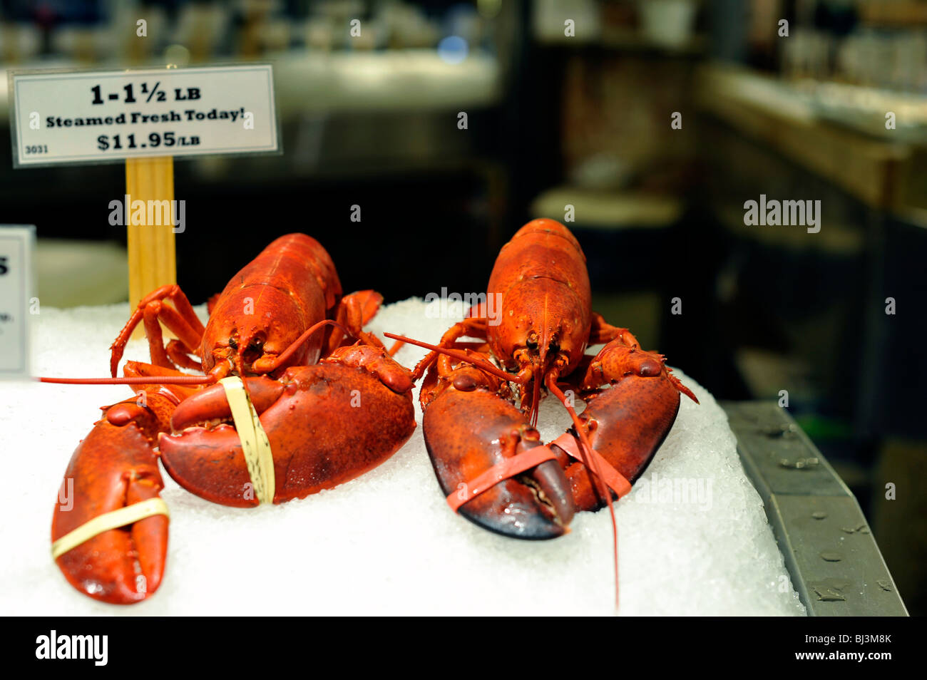 Steamed Lobsters - Stock Image