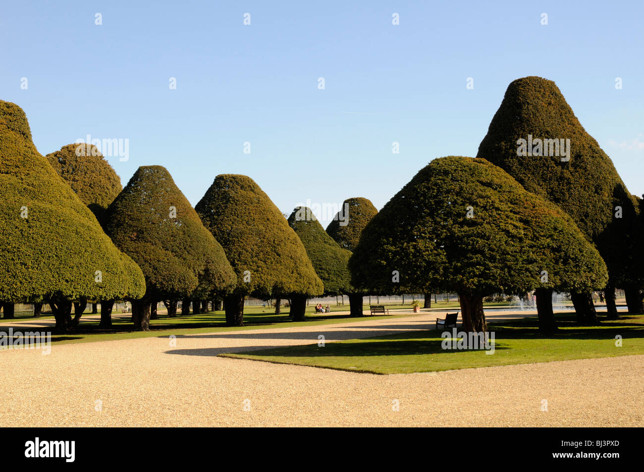 Yew trees in the Great Fountain Garden at Hampton Court, London, UK Stock Photo