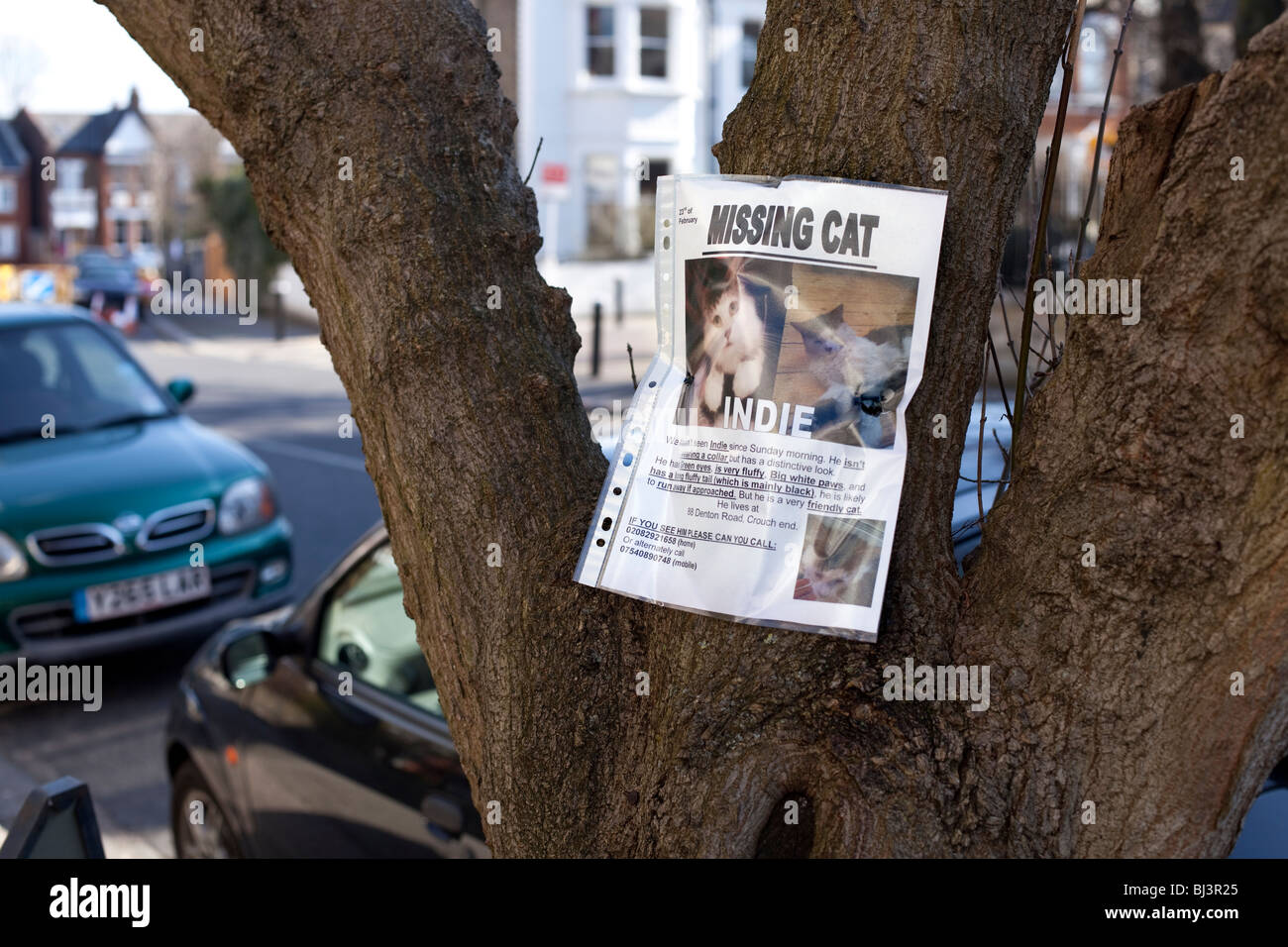 Missing Cat Stock Photos Amp Missing Cat Stock Images Alamy