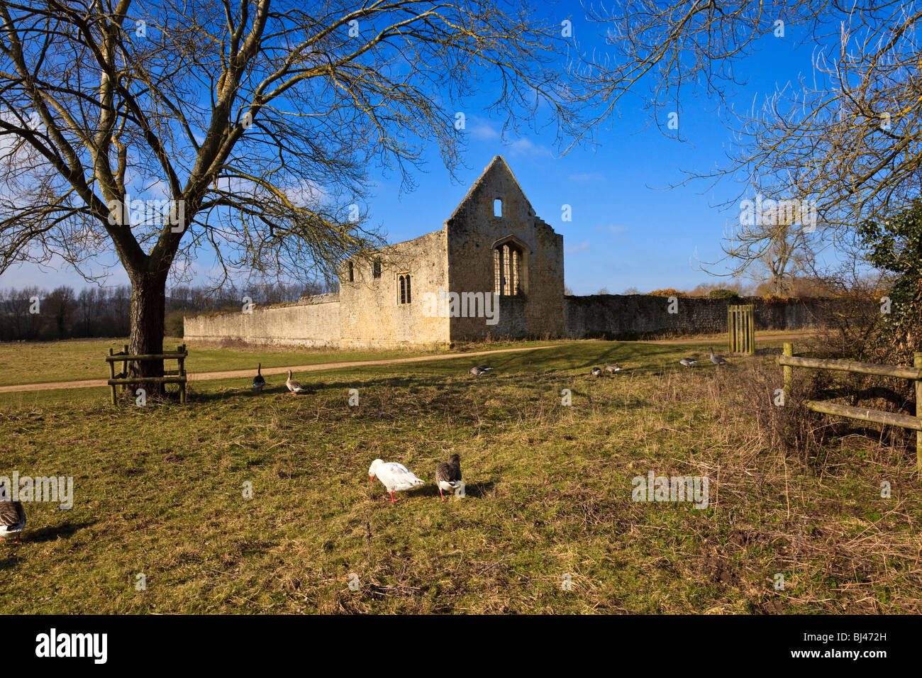 Ruins of Godstow Nunnery Rumoured to be Haunted by the Ghost of Fair Rosamund Mistress of Henry II, Oxford Oxfordshire - Stock Image