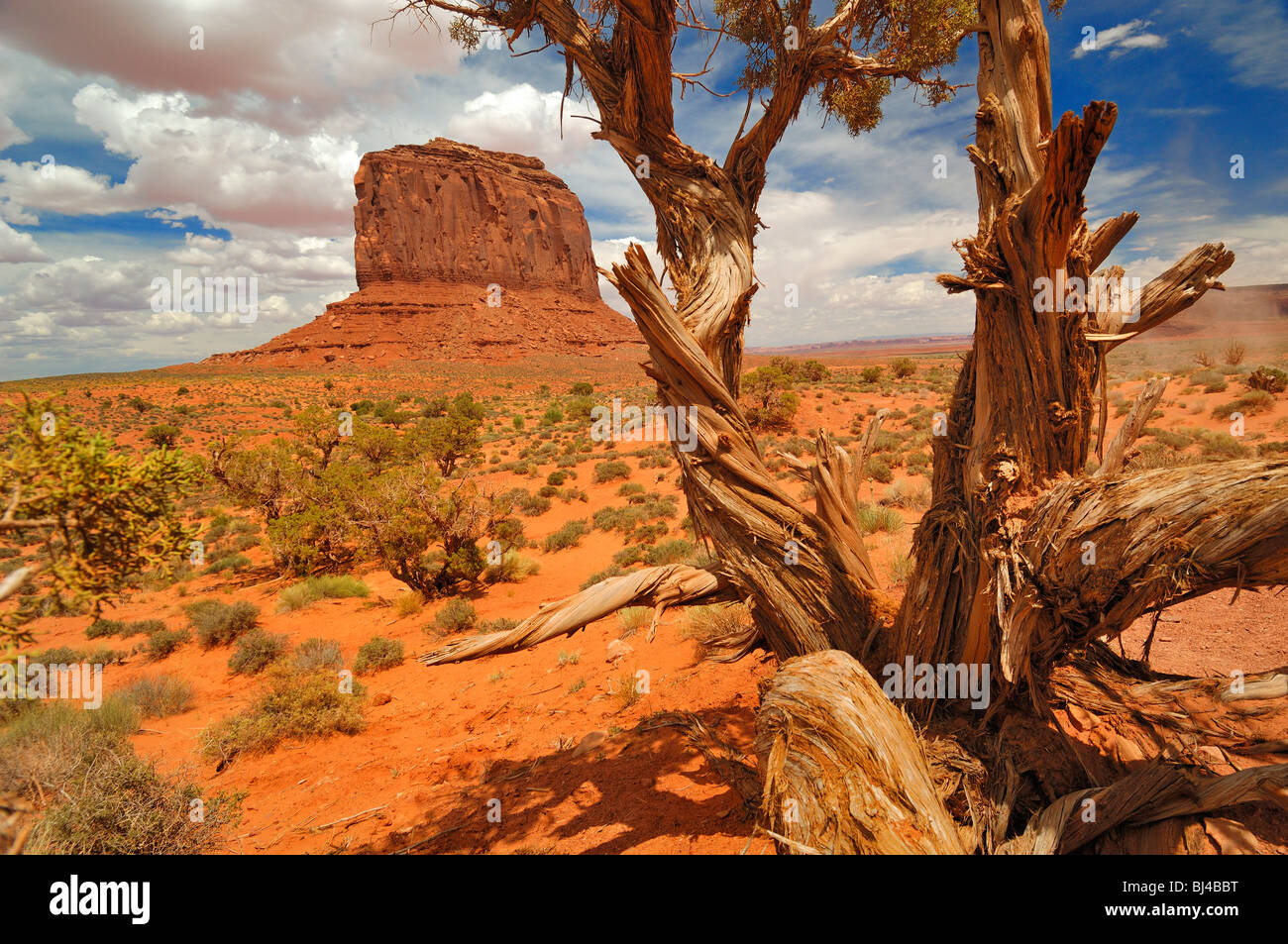 Merrick Butte and an ancient Utah Juniper tree at Monument Valley in Arizona, United States of America. - Stock Image
