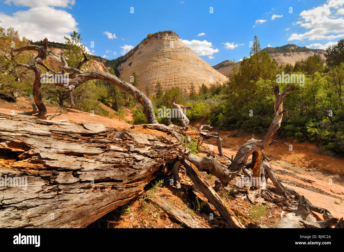 Checkerboard Mesa seen from the viewpoint at Zion National Park, Utah, United States of America - Stock Image
