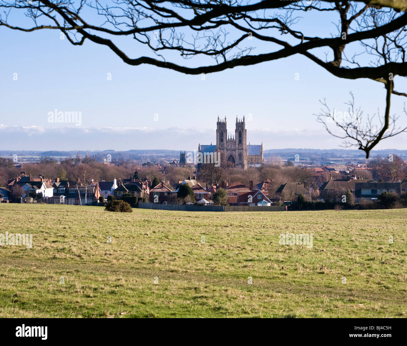 Beverley Minster East Yorkshire UK from Westwood Pastures - Stock Image