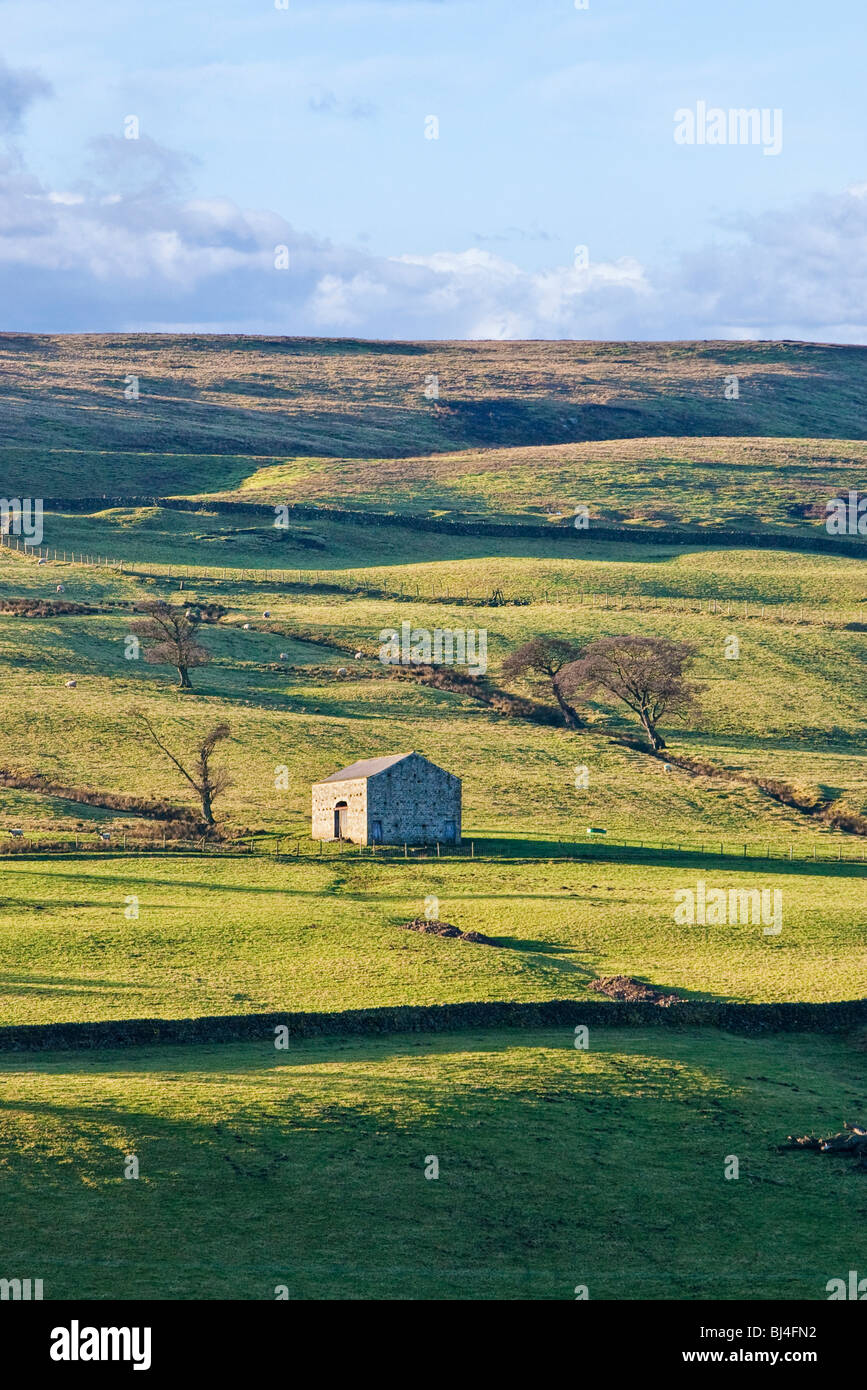 An isolated barn in Nidderdale, Yorkshire Dales National Park, England UK - Stock Image