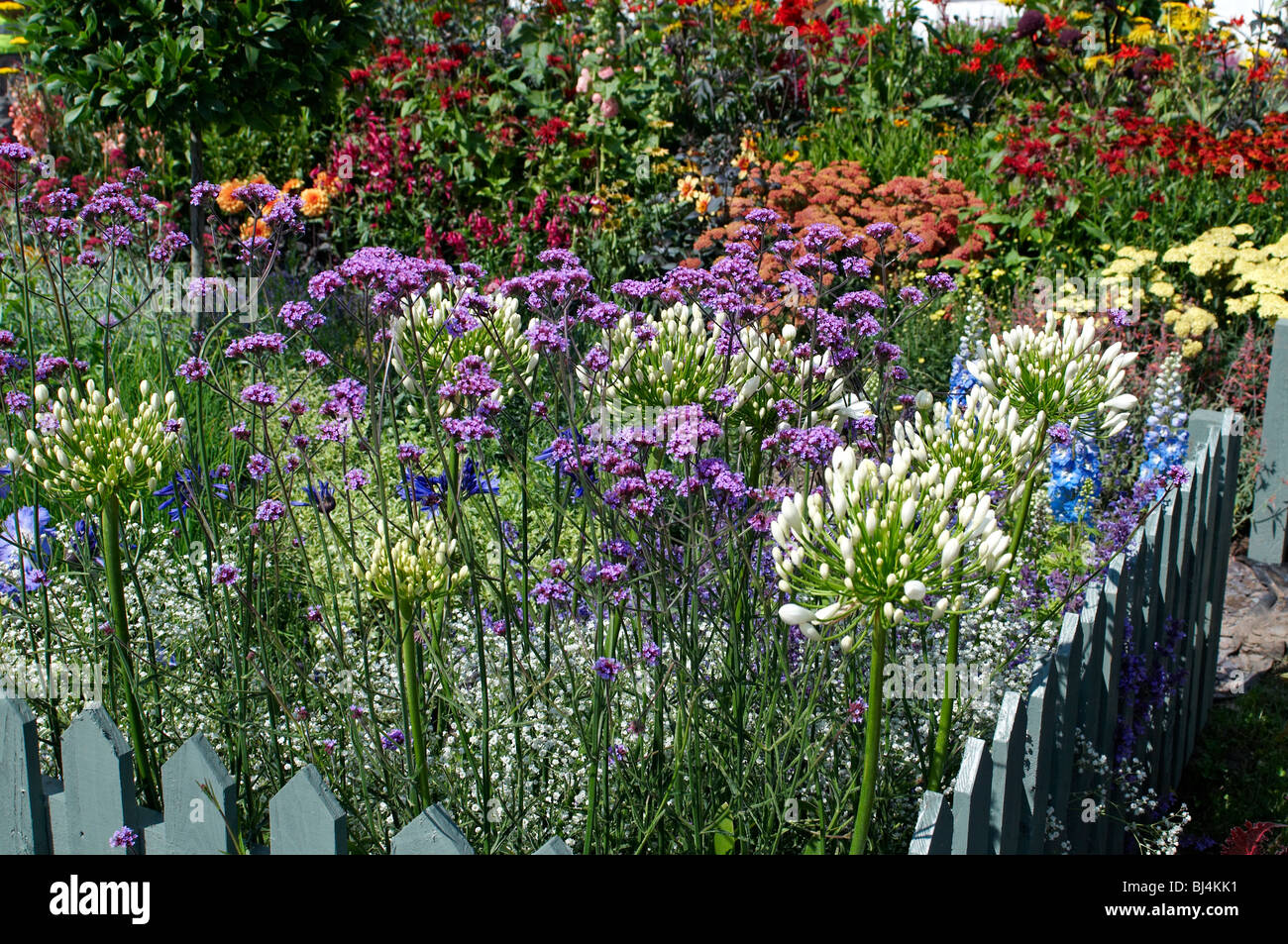 A colourful herbaceous flower border in a English country garden - Stock Image