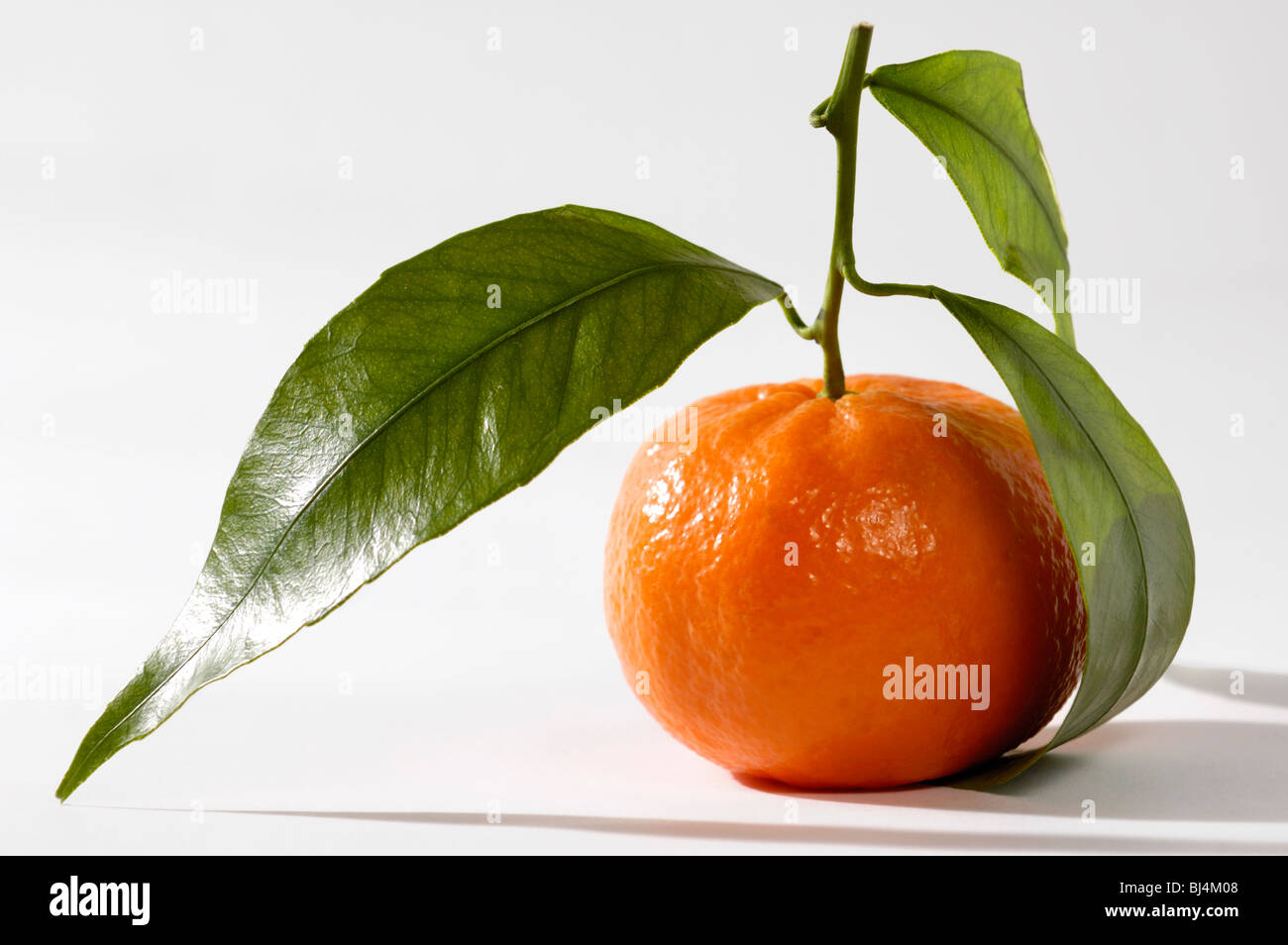 Juicy appetizing mandarin with green leaves Isolated silhouette on white background Food still life photography - Stock Image