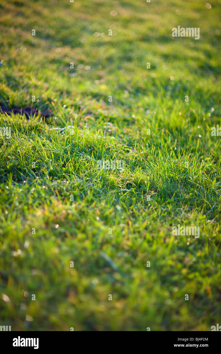 Morning grass. Shallow dof effect. - Stock Image