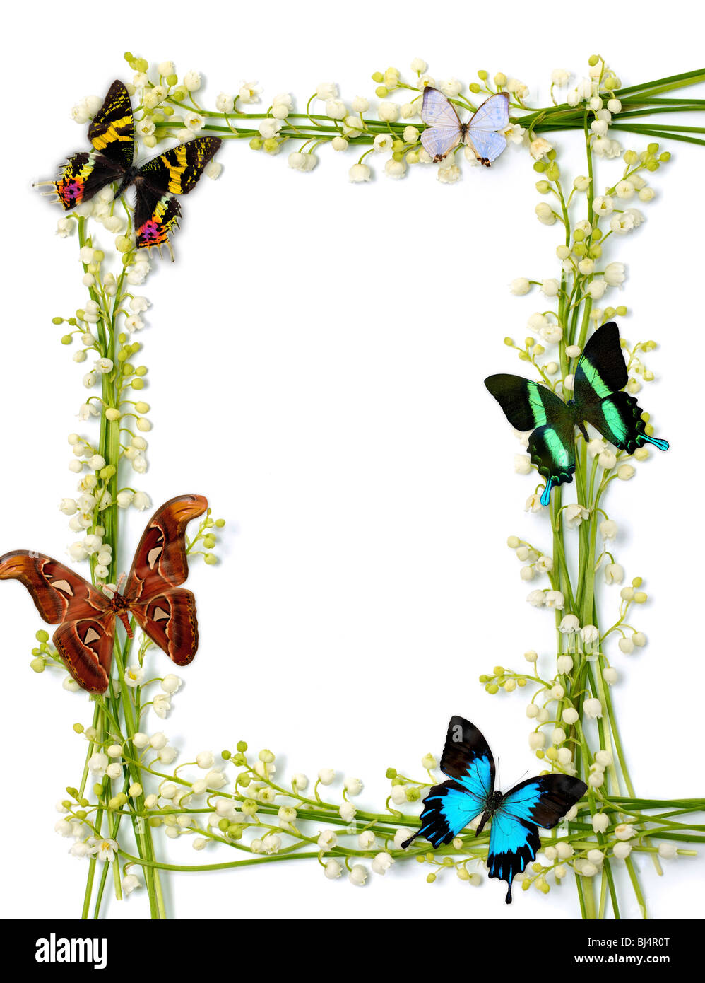 Lilies of the valley frames with colorful butterflies on white Stock ...