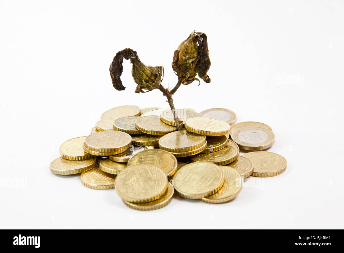 Withered plant, coins, symbolic image for failed investments, no return - Stock Image