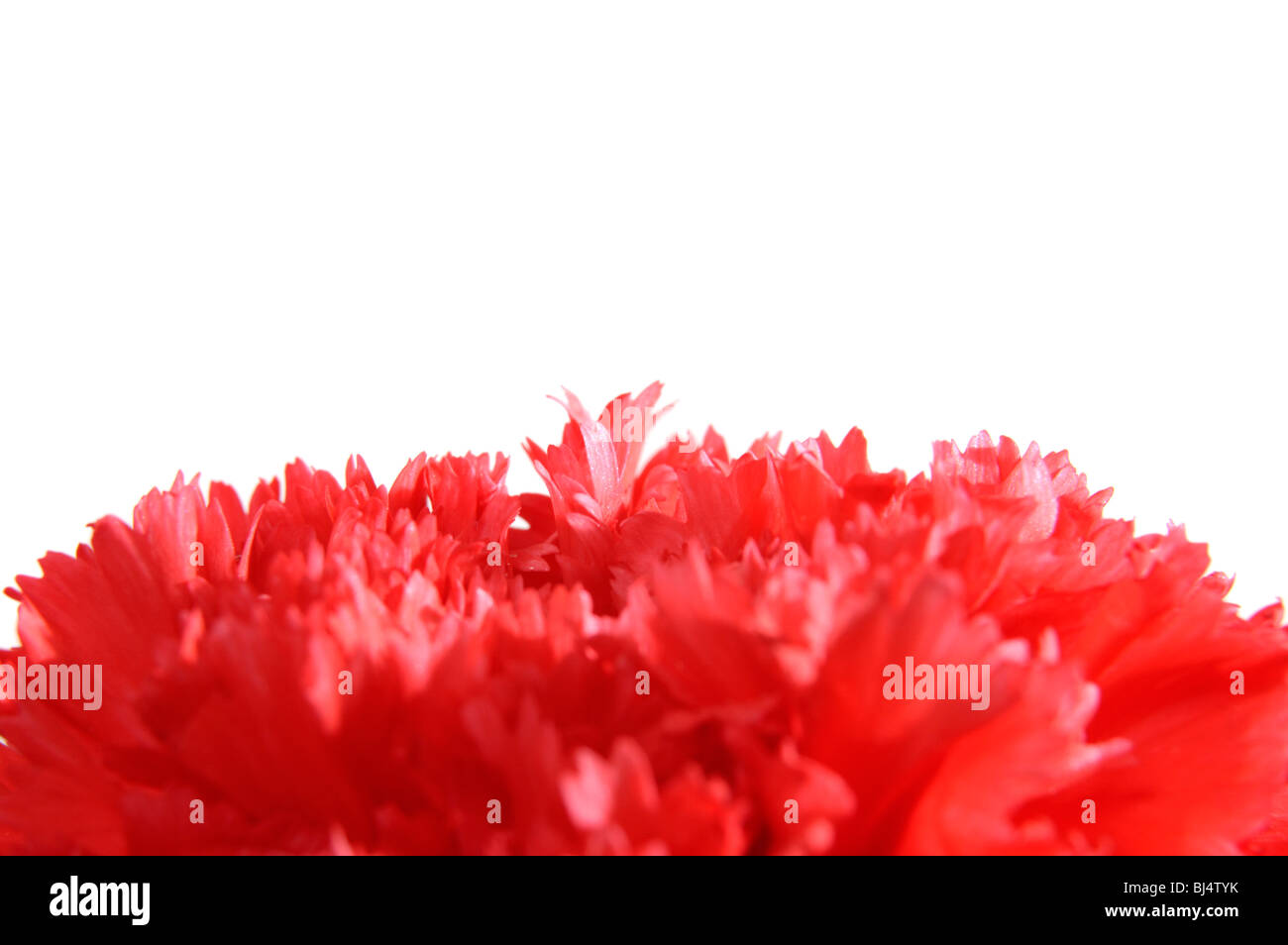 Carnation Colors Stock Photos & Carnation Colors Stock Images - Alamy