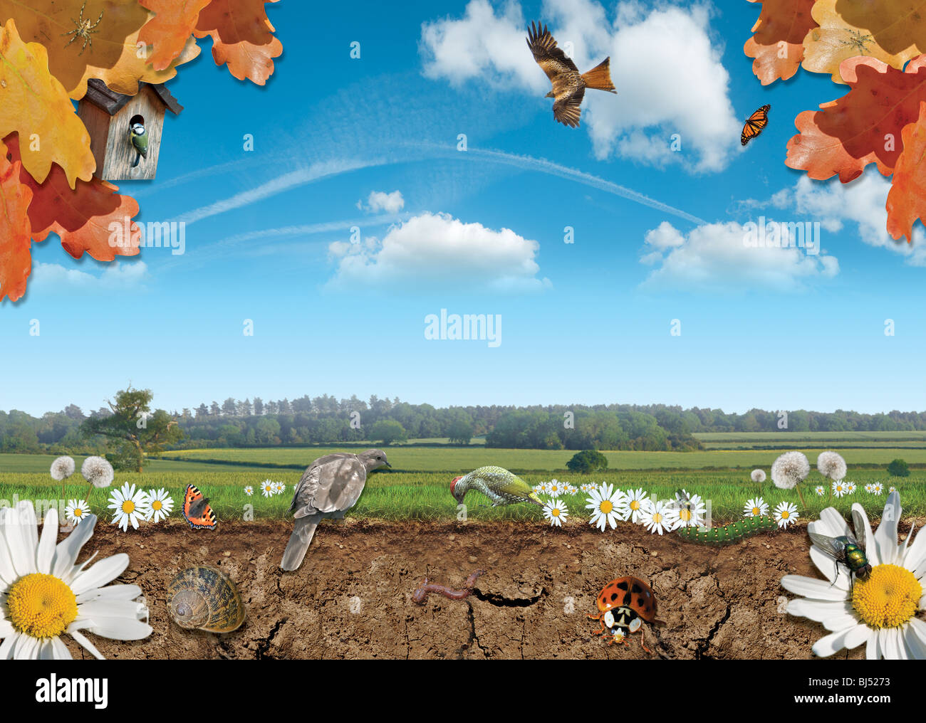 A photographic composite showing a nature scene including animals