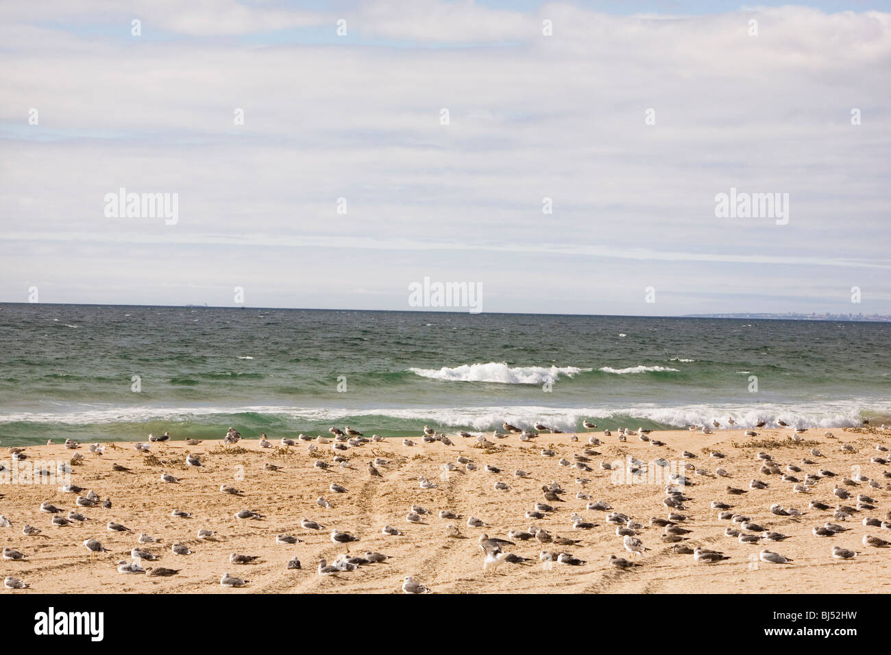 Gulls on a sandy beach - Stock Image
