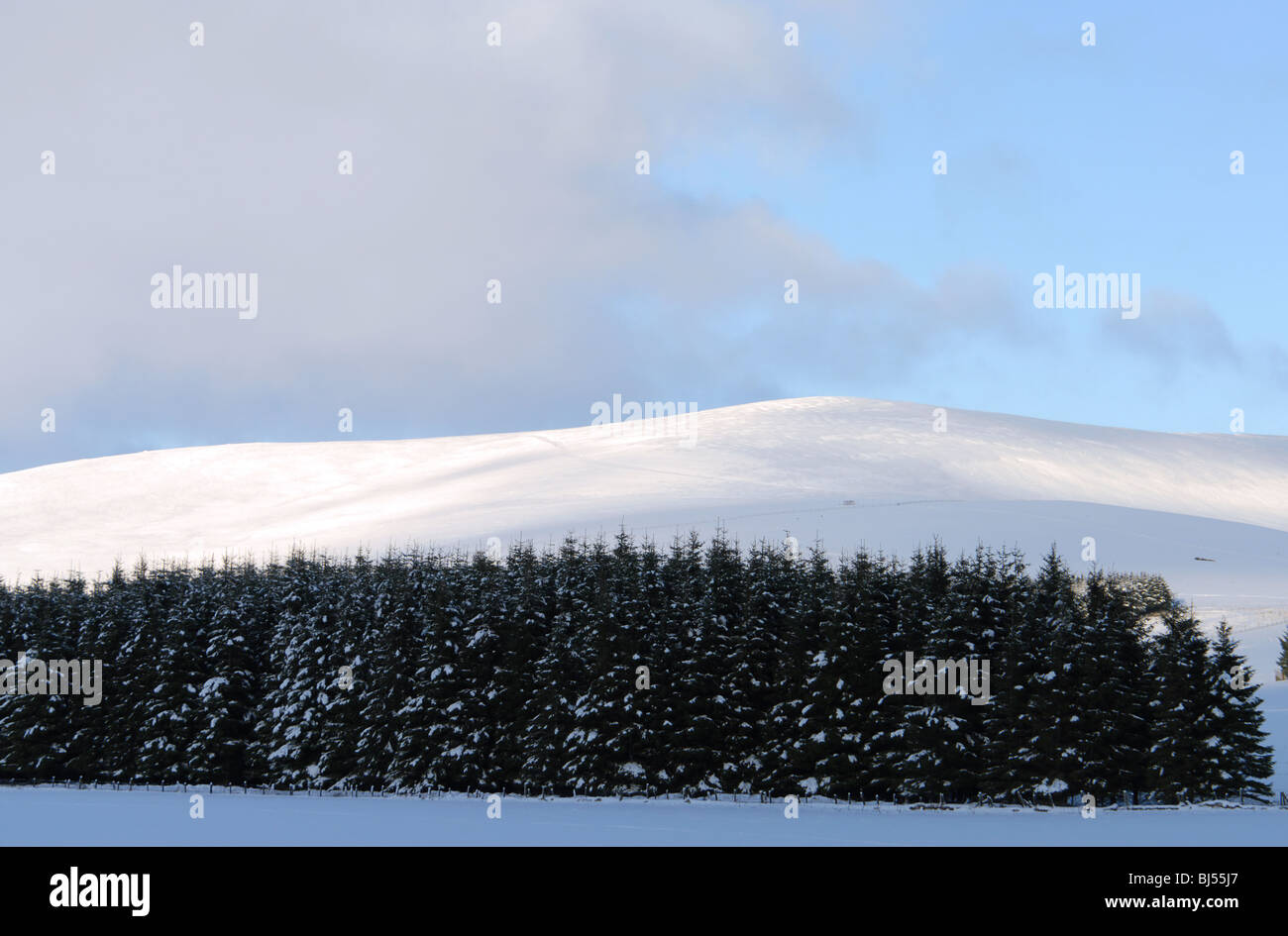 Snow covered conifers form the foreground to a winter view of the upper hills of Glenbuchat in Aberdeenshire - Stock Image