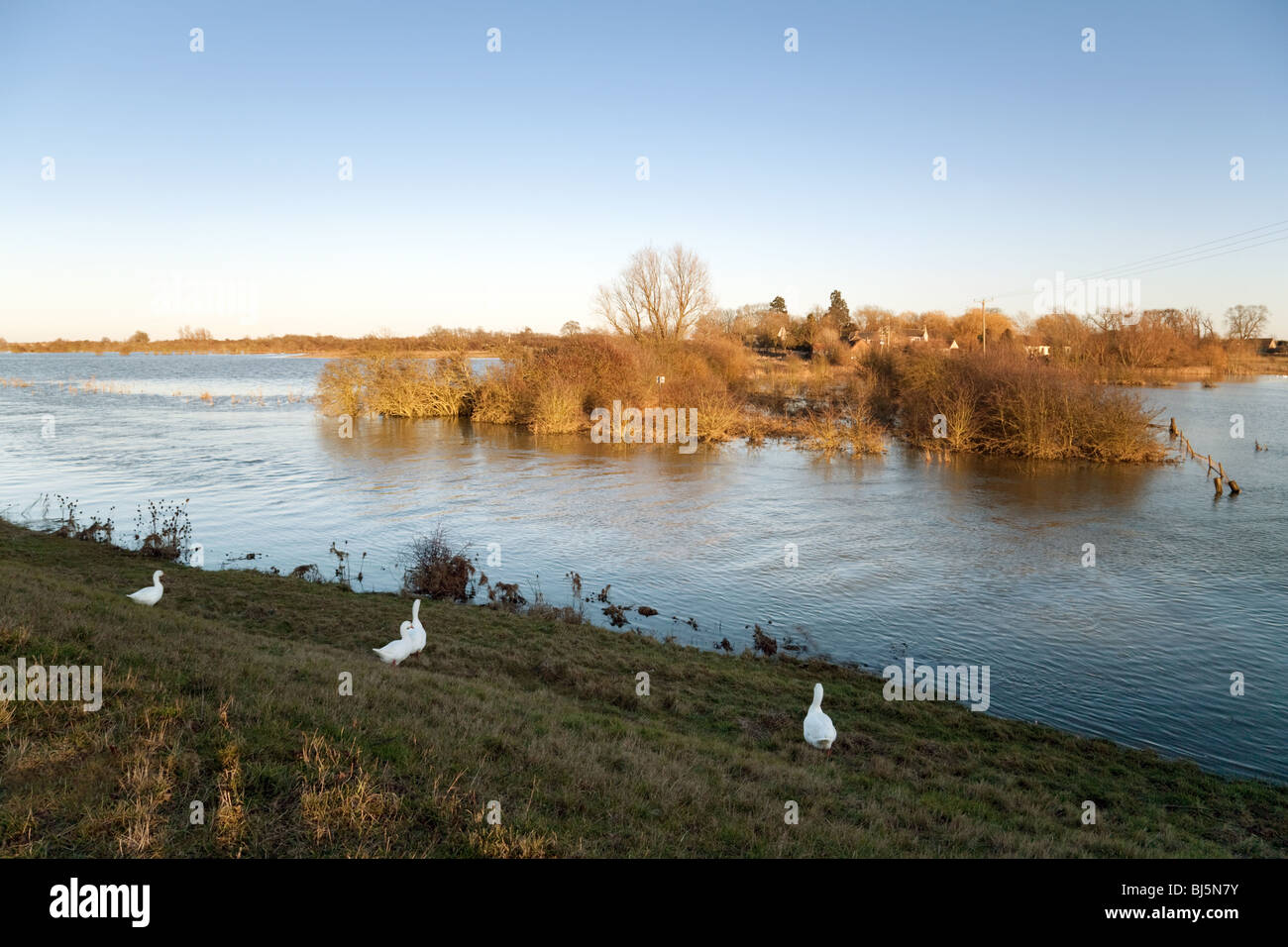 A view across the fens near Ely, Cambridgeshire, East Anglia, UK - Stock Image