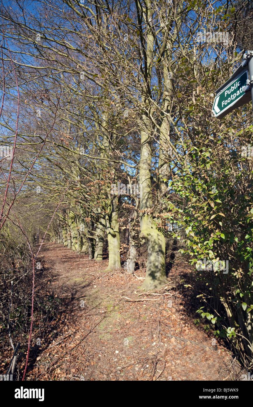 Public footpath through the woods, Six Mile Bottom, Cambridgeshire, UK - Stock Image