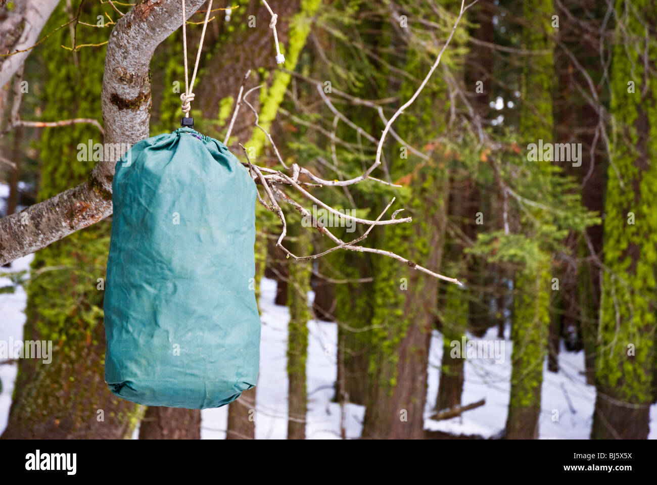 Ursack bear-proof food storage container hanging from a branch, Sequoia National Park, California - Stock Image