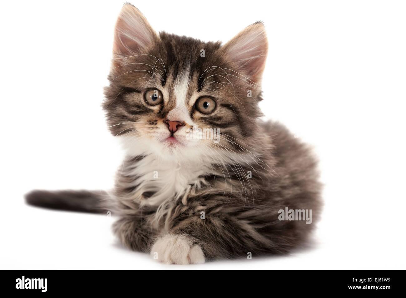 t/d cat food