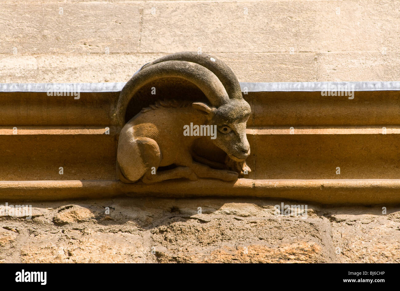 A stylized goatlike gargoyle on a college wall in Oxford (New College) - Stock Image