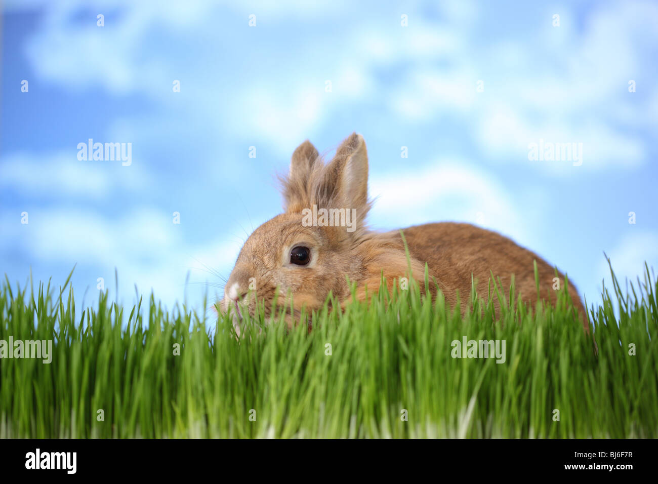 Rabbit in grass - Stock Image