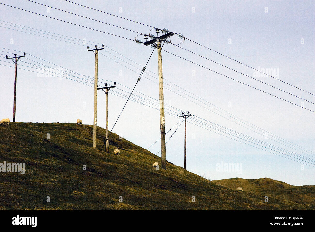 Powerlines and sheep in Wales. - Stock Image