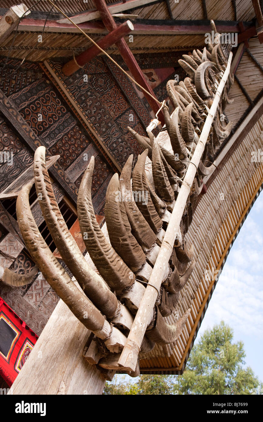 Indonesia, Sulawesi, Tana Toraja, Bebo, high status tongkonan house decorated with many buffalo horns - Stock Image