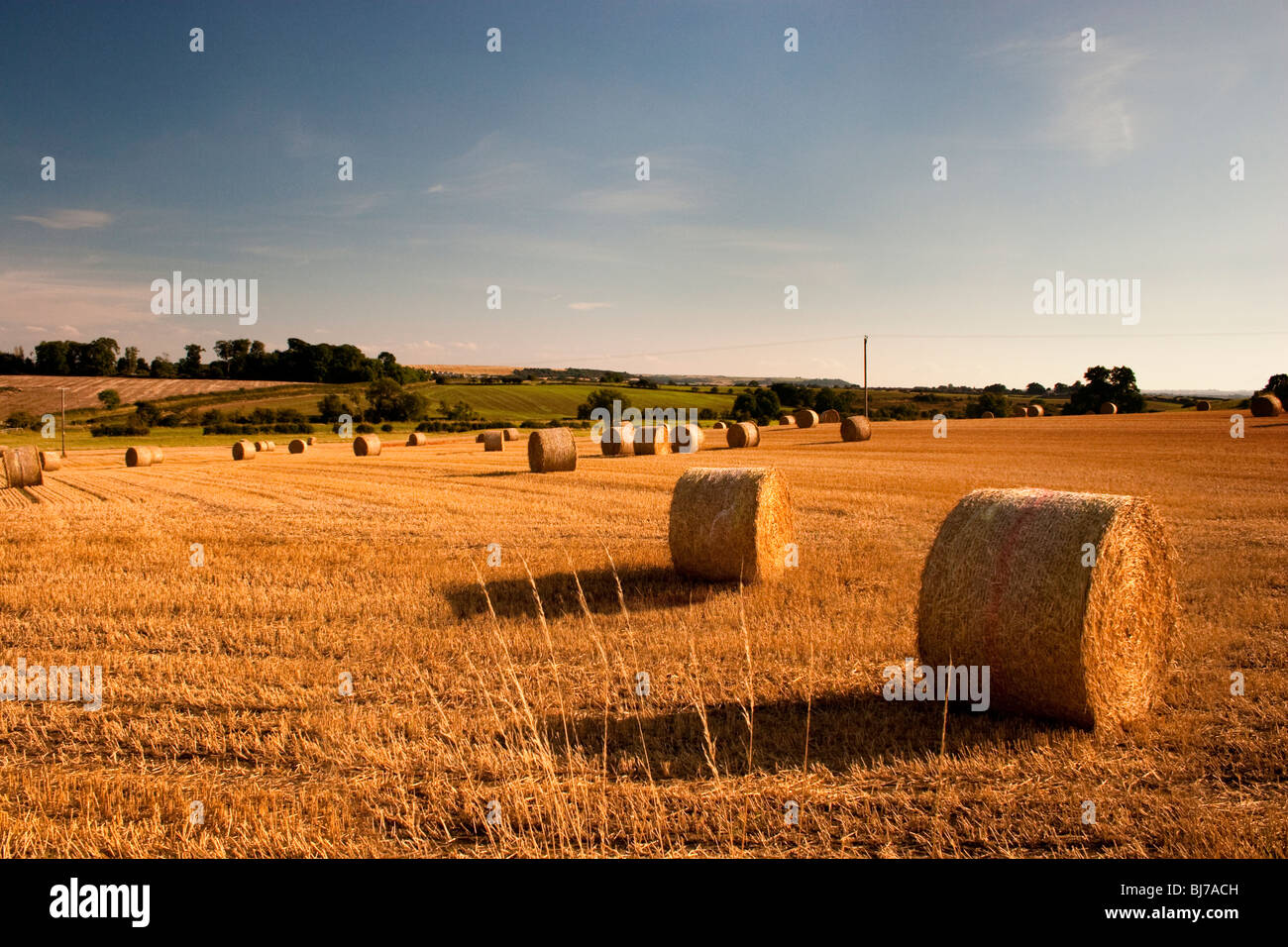 Hay bales in field in evening sunlight. - Stock Image