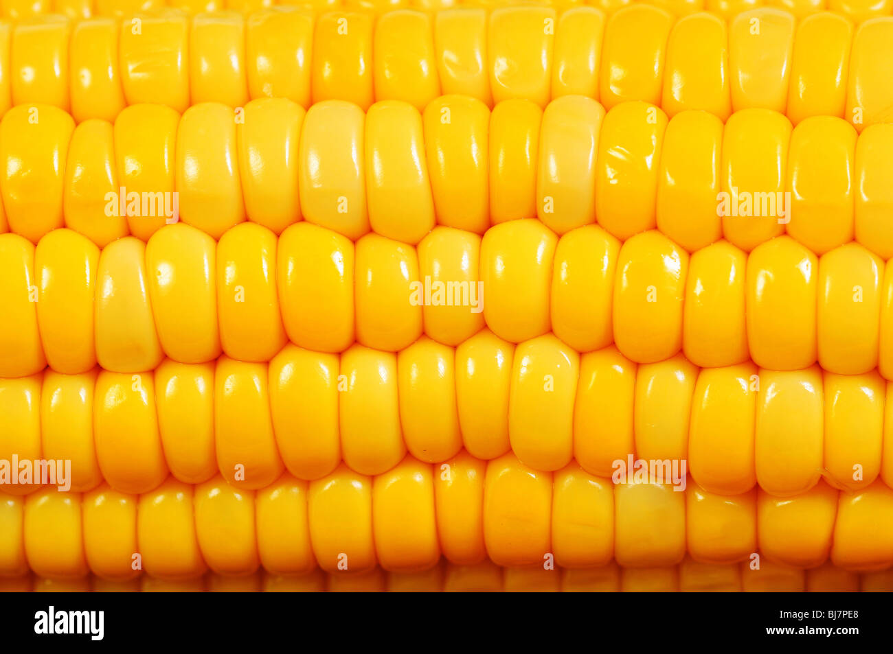 Extreme close up of yellow corn cobs texture - Stock Image