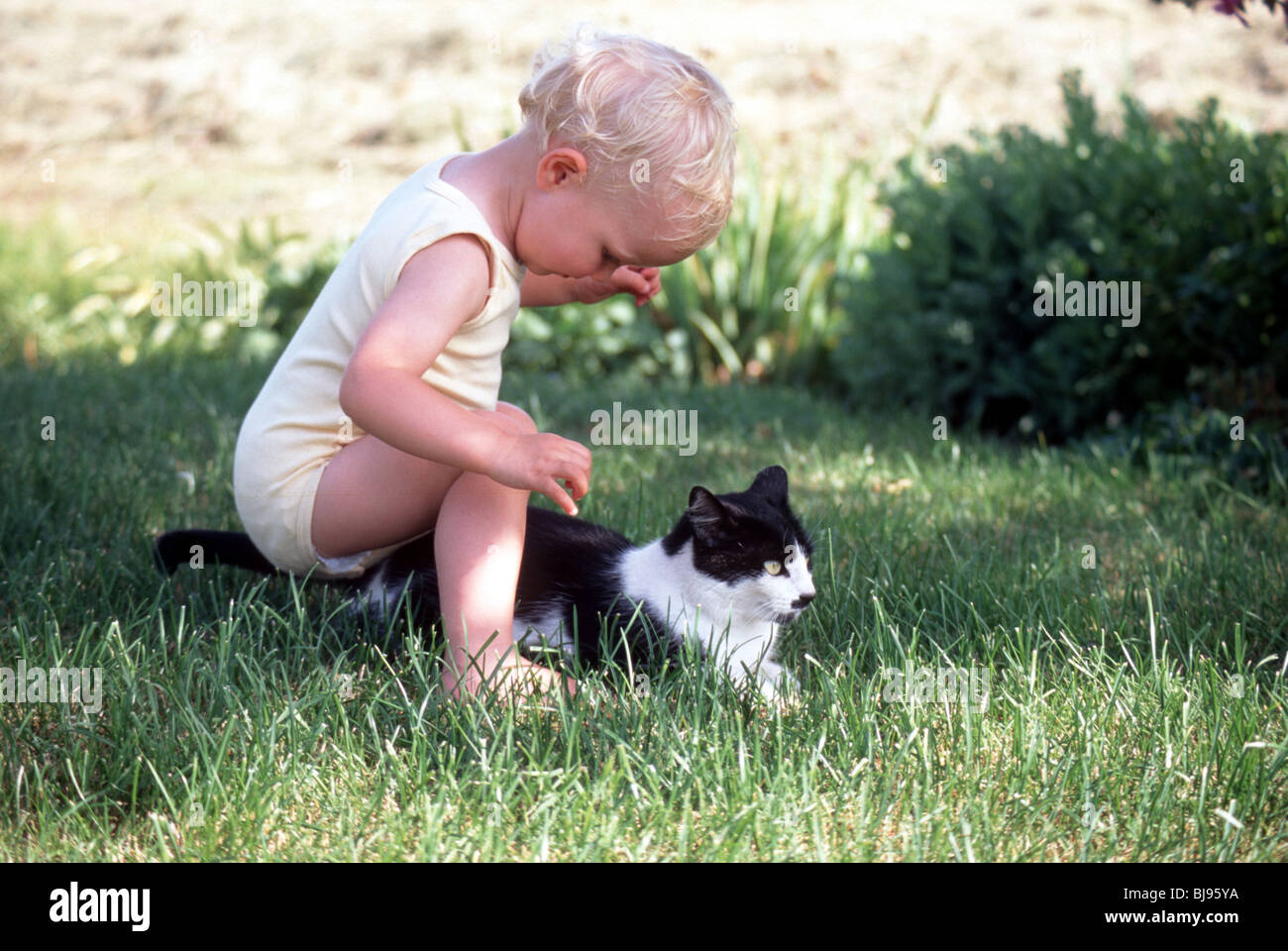 Child playing rough with pet cat outdoors in back yard  - SerieCVS100008247 - Stock Image