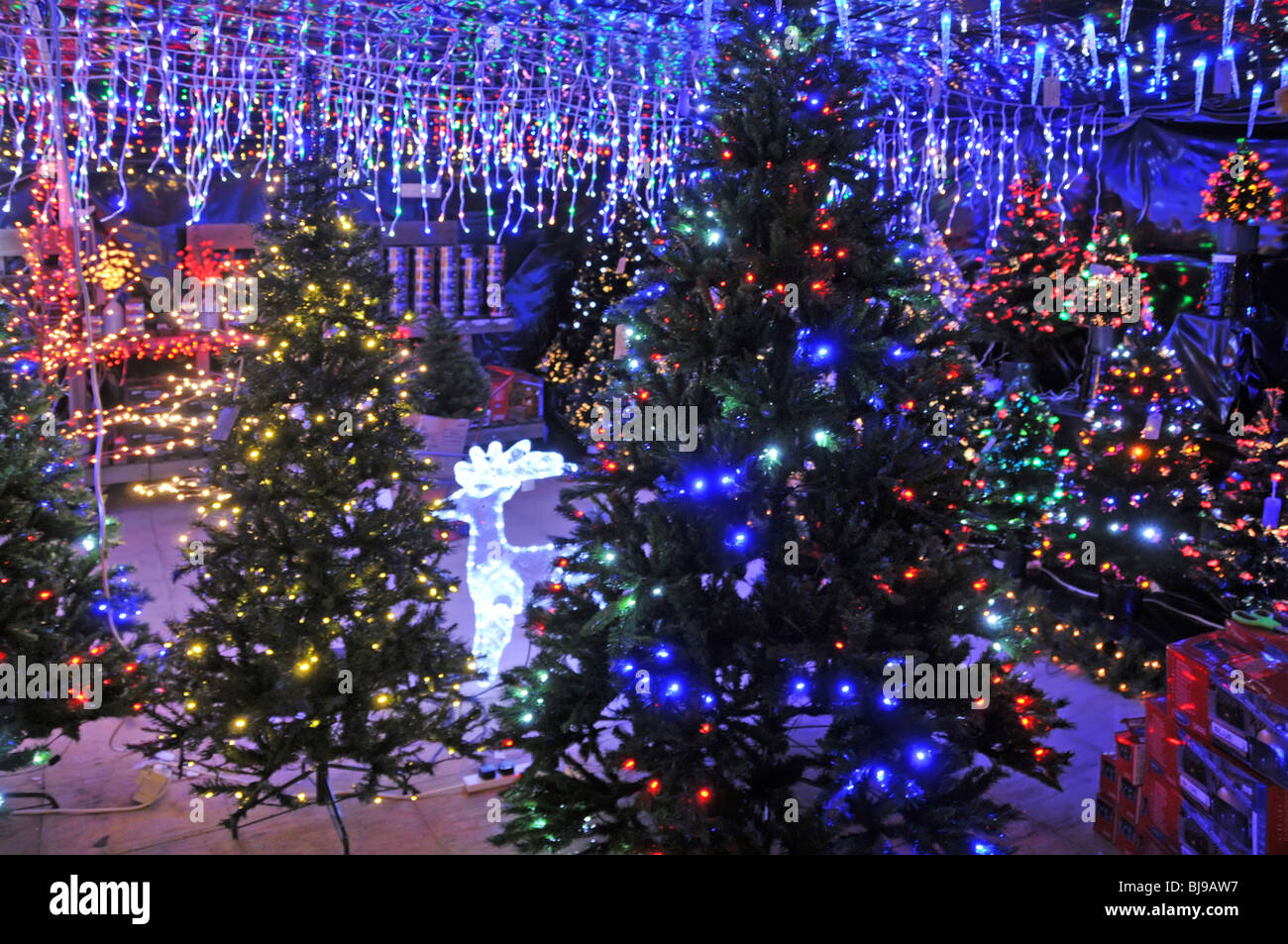 garden center indoor display of christmas trees and lights for sale stock image