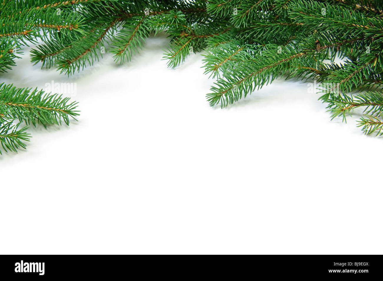 Pine branches frame isolated on white background - Stock Image