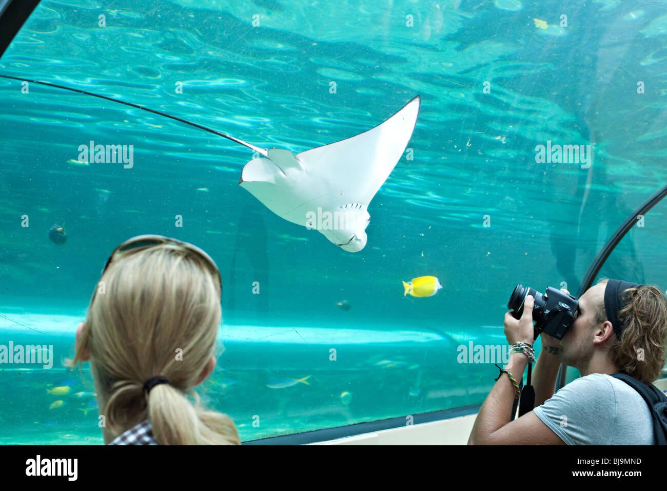 Tourists photographing  stingrays in Sydney Aquarium, Australia - Stock Image