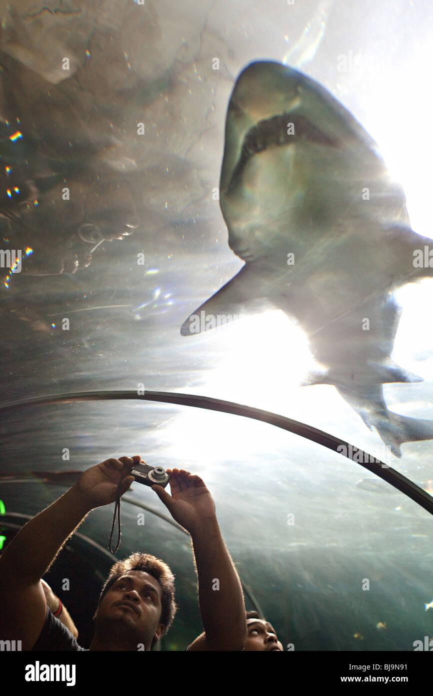Tourists photographing sharks and stingrays in Sydney Aquarium, Australia - Stock Image