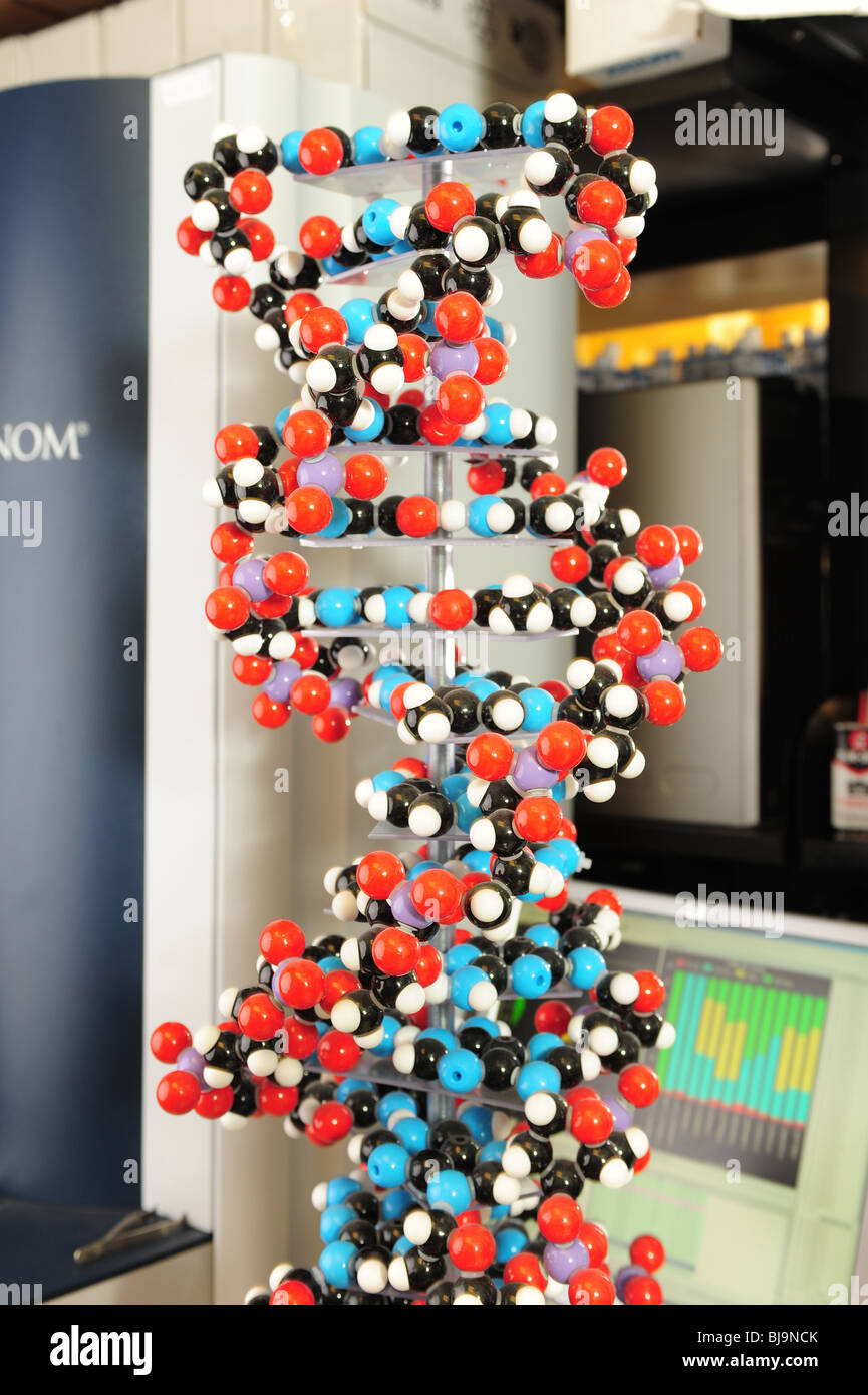 DNA Molecules structure model - double helix- traits - Stock Image